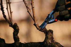 Simonit & Sirch-féle szőlőmetsző szakmai napok